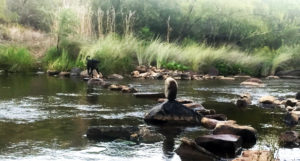 River Pic 1